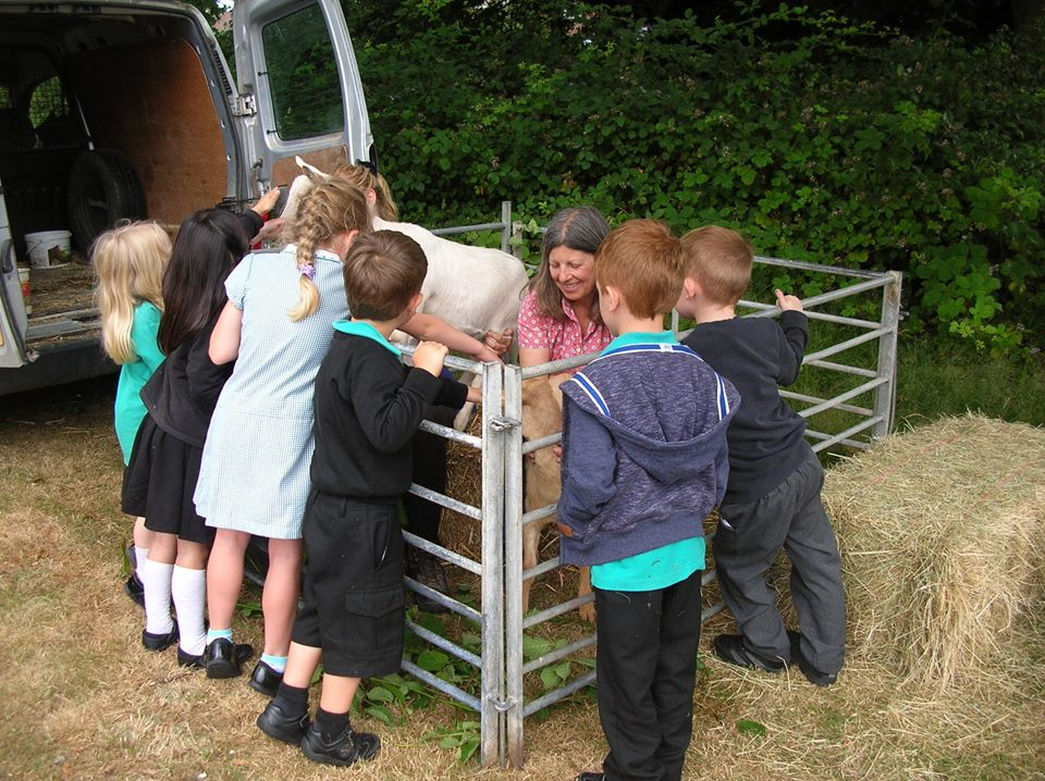 "Back in July 2015, Ailsa and I took Lupin and Pascha to Hillbourne school in Poole to support the ""Heidi "" project that the children were working on."