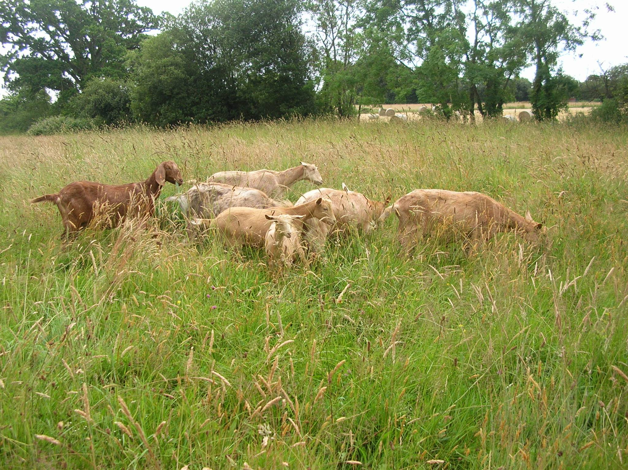 Paschal and Lupin are enjoying going out in the big field with the grown ups!