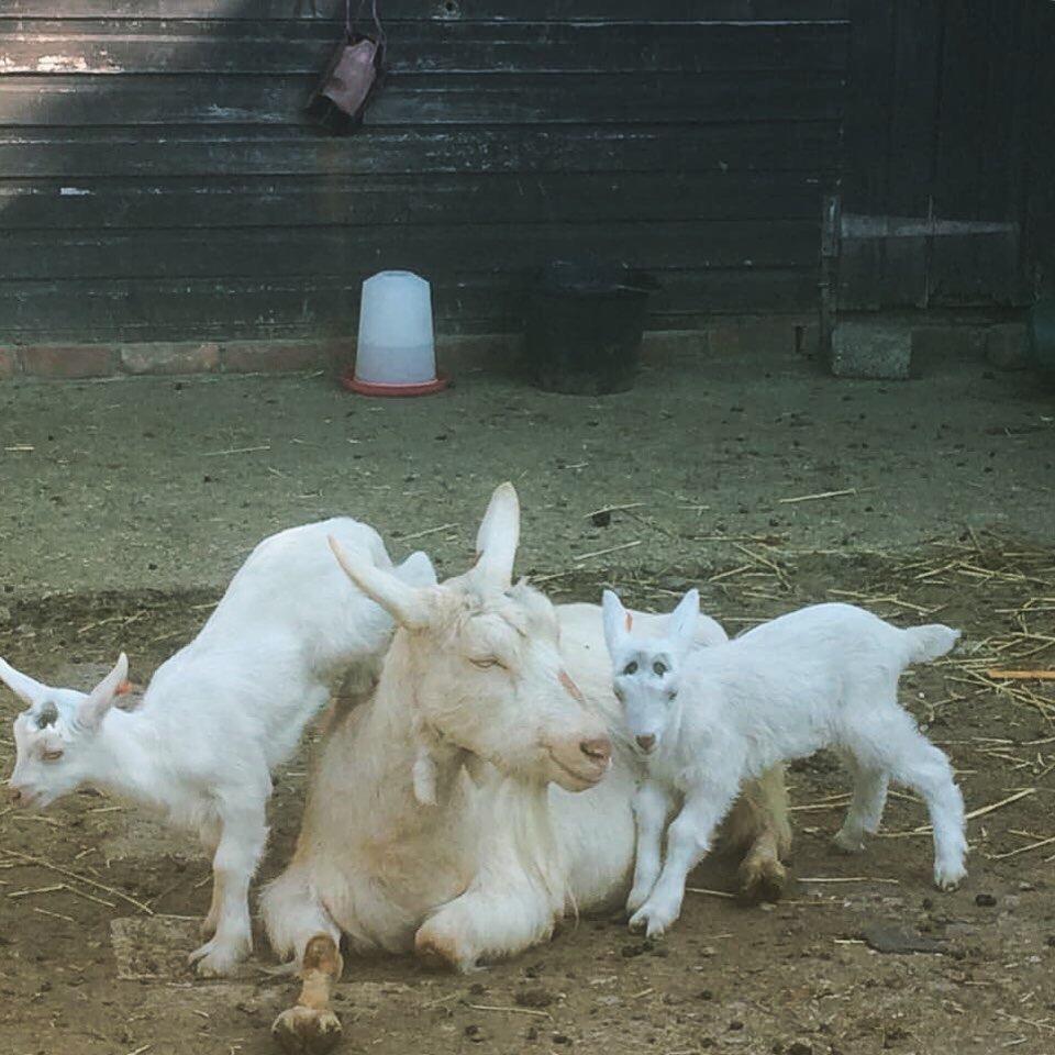 Leapfrog with mum!